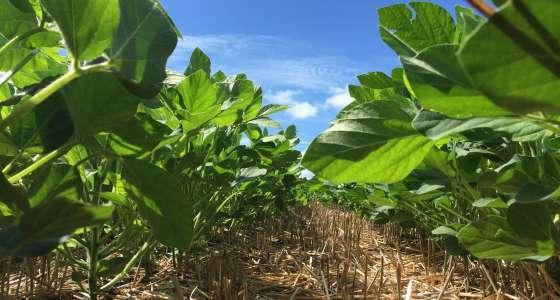 Tecnologia HB4® é apresentada aos agricultores