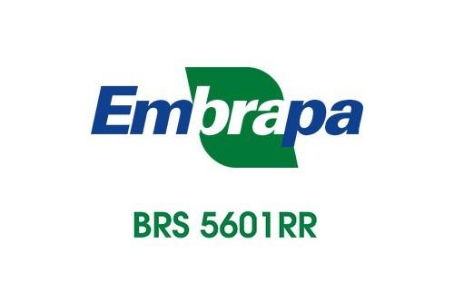 BRS 5601 RR