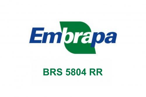 BRS 5804RR